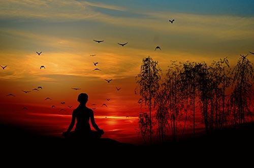 Tarot animales-totem-o-espirituales Animales tótem ¿cuál es el tuyo? Aura y energías
